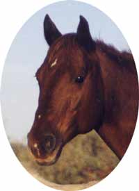 Bar Money Maudie - 1990 AQHA Mare